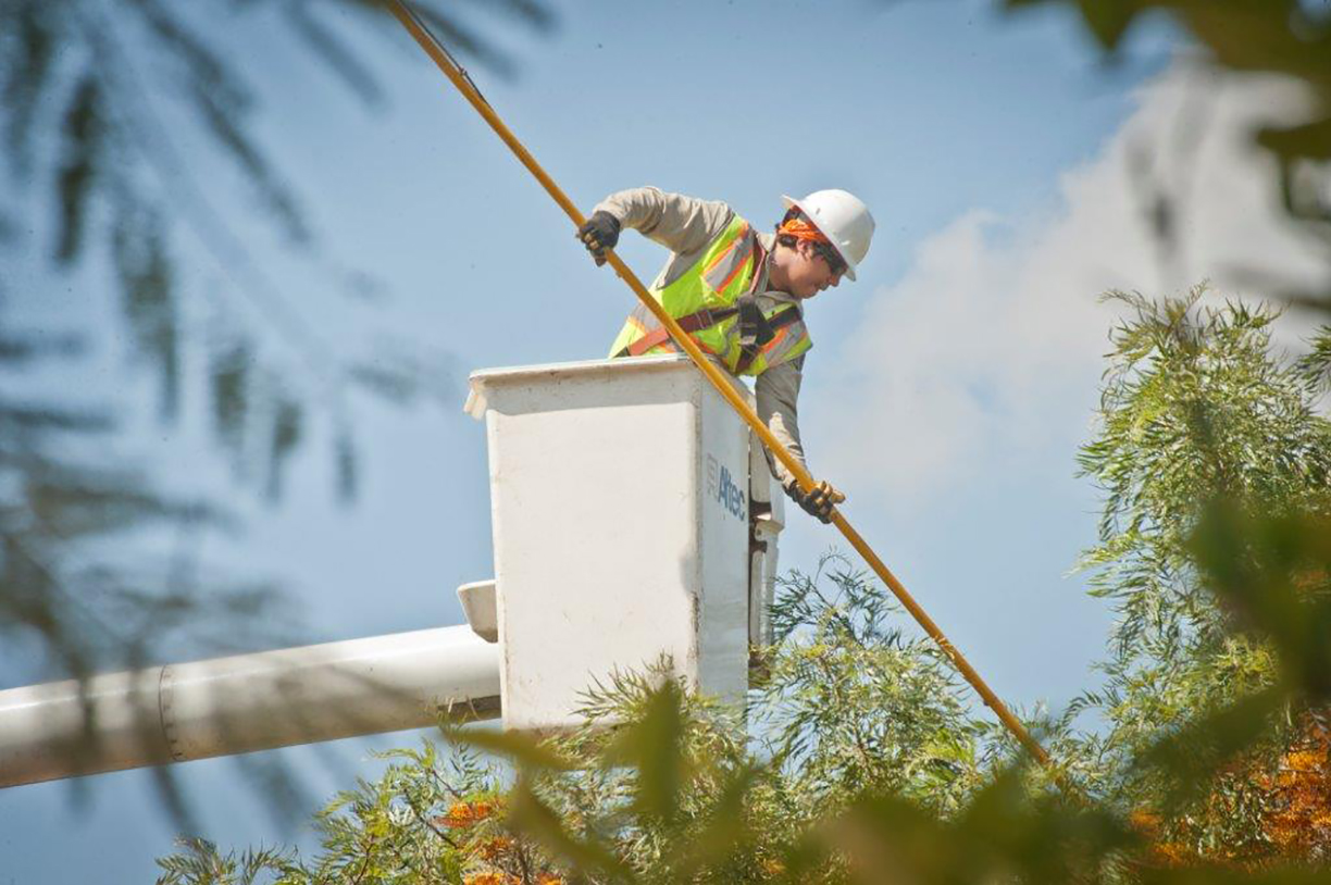 Planting Trees Around Power Lines : Trees and power lines plant smart trim smarter edison